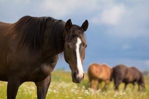 horse in a field in the sun