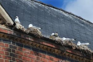 nests in gutter